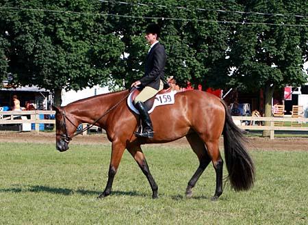 F23 3 Year Old Novice Horse Hus Pleasurehorse Com